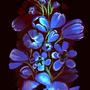 Birth Flowers by rvhomweg