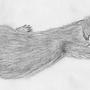 Sleeping ferret by BIGraw