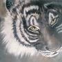 Tiger Tiger by PaulaHarris