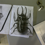 atlas beetle-drawing by Kiabugboy