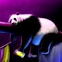 Team 4 - Sad Panda by mefesto