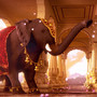 Indian Elephant in Hindu Temple by ThilakanathanStudios