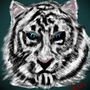 White tiger by brennandownhill