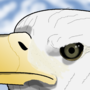 Bald Eagle by naro3000