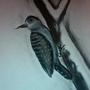charcoal woodpecker