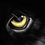 Eyes of a Preditor