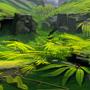 Nature study by rvhomweg