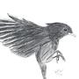 Bird by brennandownhill