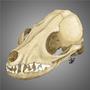 Fox Skull by dYb