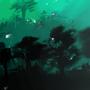 Greenish by McHolland