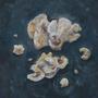 Last Crumbs by Filelei