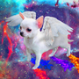 Francesco, Chihuahua of the Universe. by mcweiser