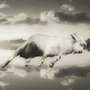 Sleeping goat by EdKempeper