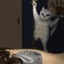 Kitten's attack