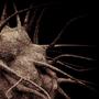 Bacterium: Demagnoecyte by mematron