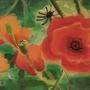 Poppy field by HlihorAlecsandra