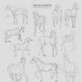 Horse studies by SimonT