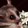 Mouse Lemur (Daily Draw - 17)