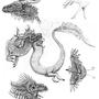 Various Dragon Sketches
