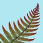 Fern Leaf by Alkiira