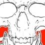 Angry Horned SKull