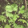 A Jungle Photo Study by WonderfulMrSwallow