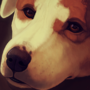 Chloe - Commission by Anti-Dark-Heart