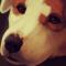 Chloe - Commission