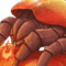 Dragon Mite