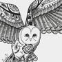 Barn Owl by AmyBell