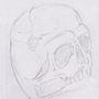 Skeleton Study by Tomore
