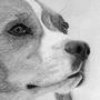 Beagle by Damrock