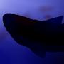 lurking underwater by spottysneeky