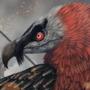 Bearded Vulture: 2015 by Mozakade