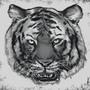 Sketch - Tiger