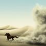 Desert Horse by JoannaChlopek
