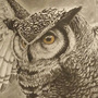 Charcoal Owl by yatika13