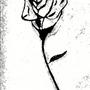 Twight Rose