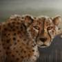 Cheetahs by MWArt