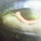 A blue mans eye