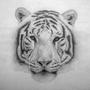 White Tiger Pencil Drawing by Damrock