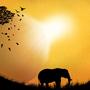 The Elephant by Stellarian