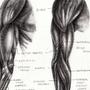 Anatomy Study 01