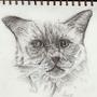 Cattywatty by Jonesy1970