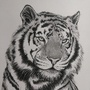 Tiger by Mariaan