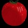 Tomato by Anthony-Liberty