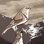 """""""Falcon"""" by LUCA-FATTORE"""