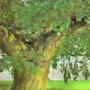 Highbark Hollow by Tedecamp