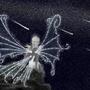 Star Fairy by EchoRun