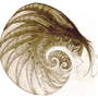 Shrimp Fractal